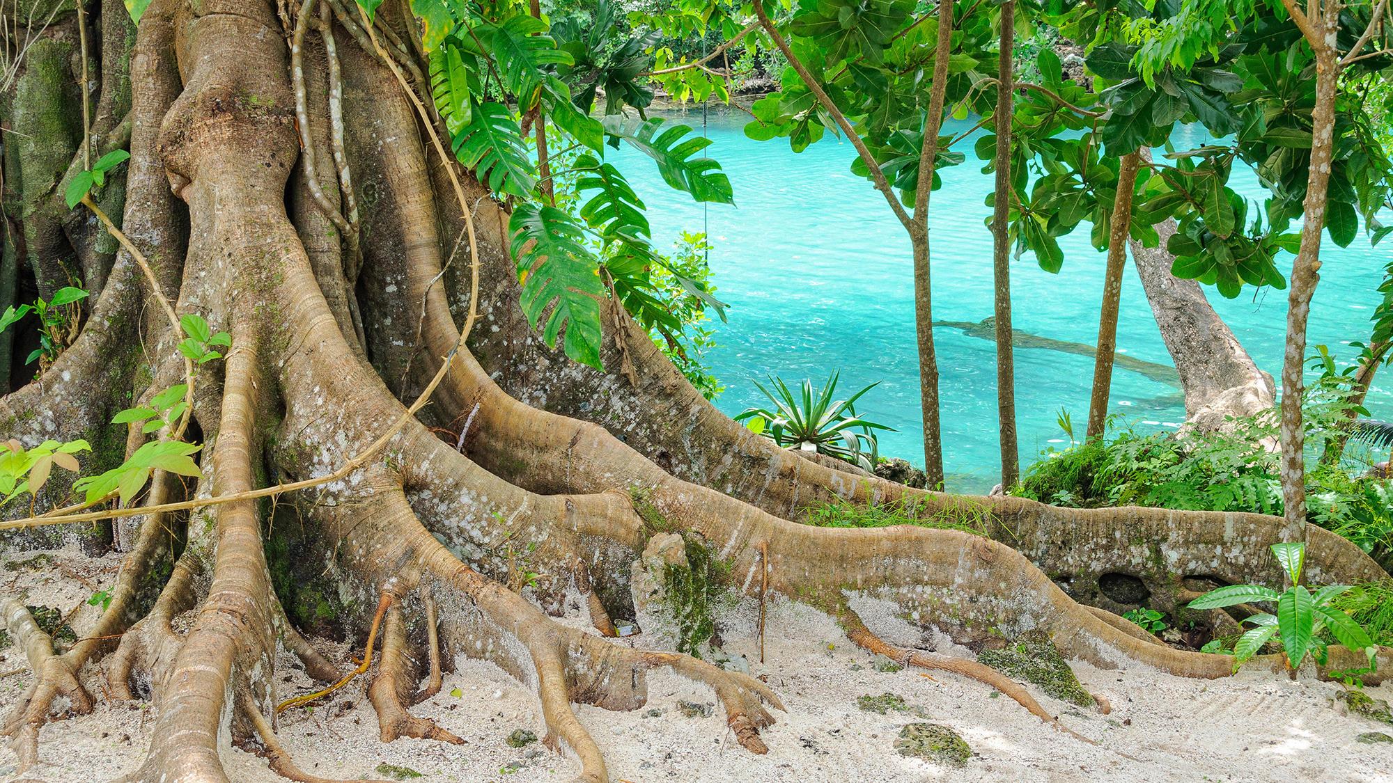 Vanuatu nature