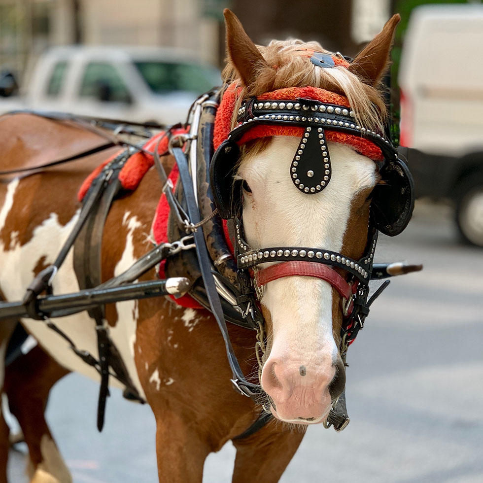 Historic Horse Carriage Rides near Falkensteiner Hotels and Residences