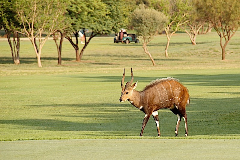 Magalies Park Property Attractions