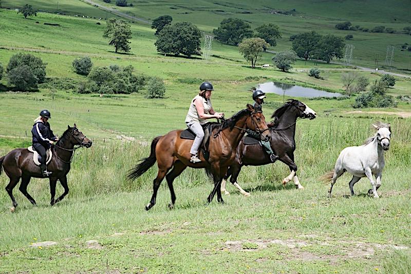 Midlands Saddle & Trout Property