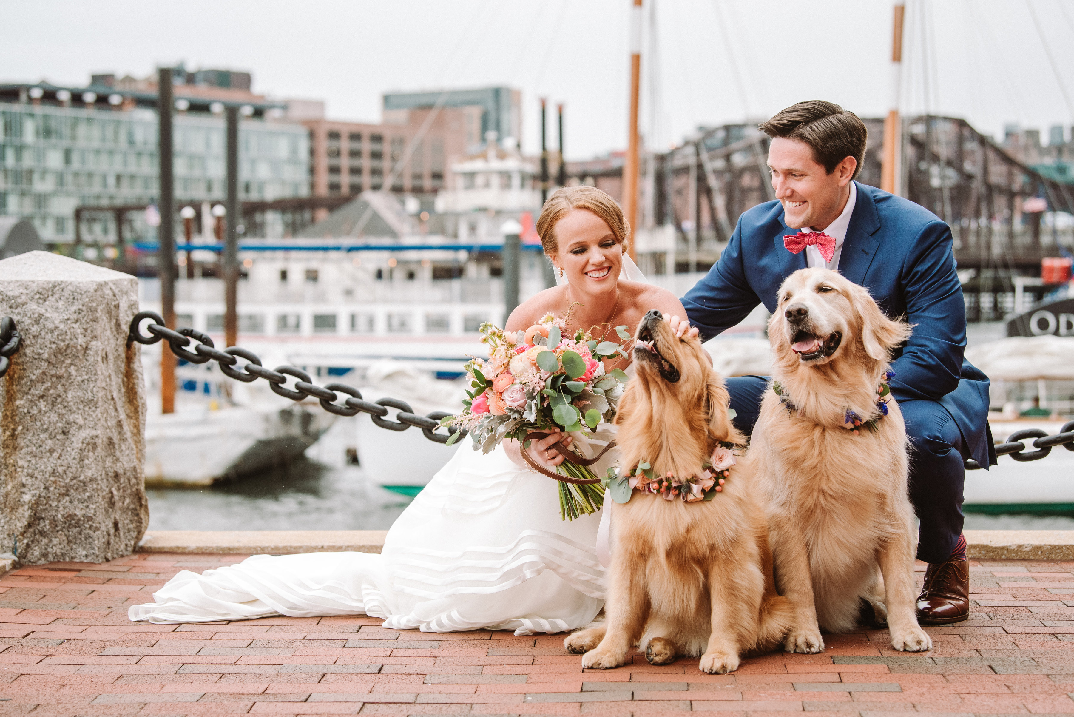 Newlyweds at Boston Harbor with golden retrievers