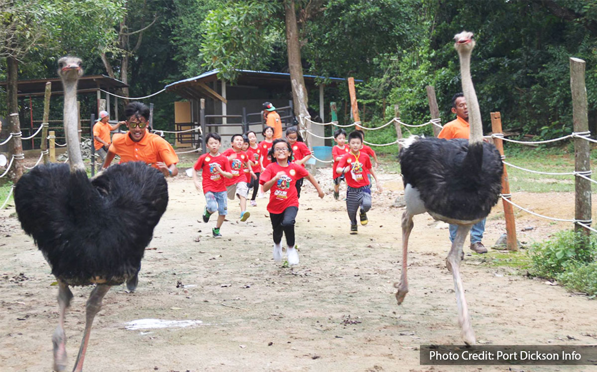 kids with black ostrich at ostrich farm of port dickson