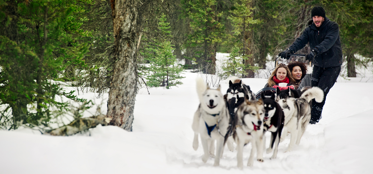 dog sledding tour in canmore