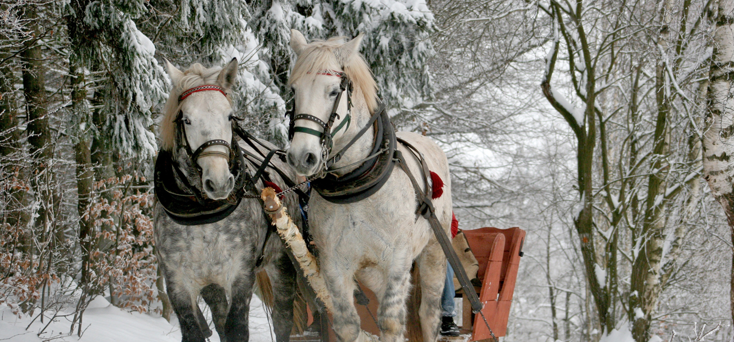 winter sleigh ride with horses