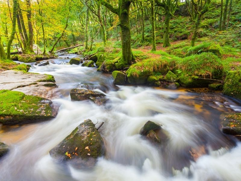 Autumn woodland walk in Cornwall