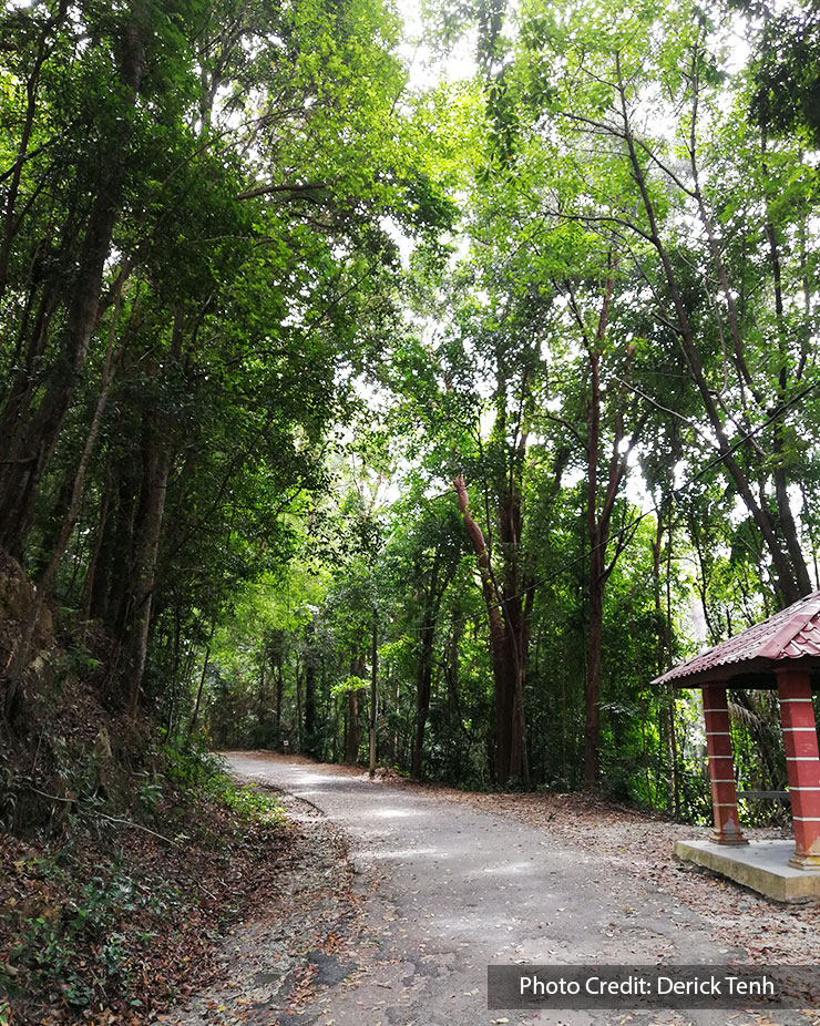 forest hiking trail of tanjung tuan port dickson