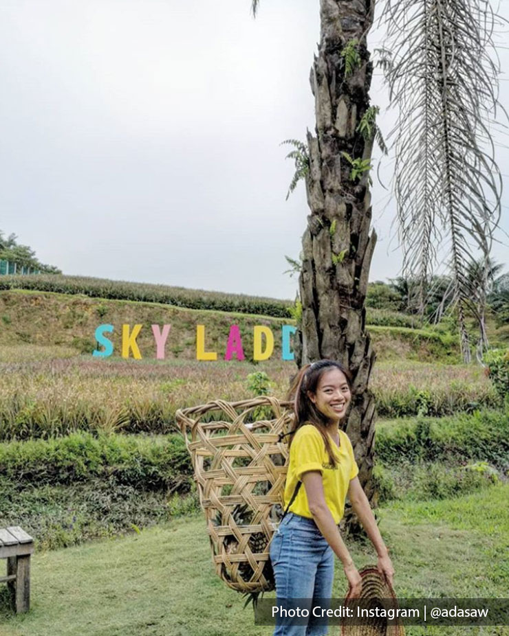 woman with yellow shirt sky ladder pineapple farm port dickson