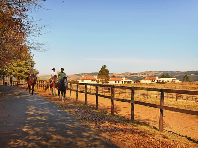 Midlands Saddle & Trout