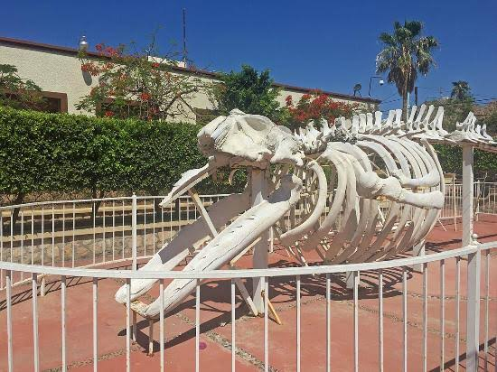 Whale skeleton outside the museum