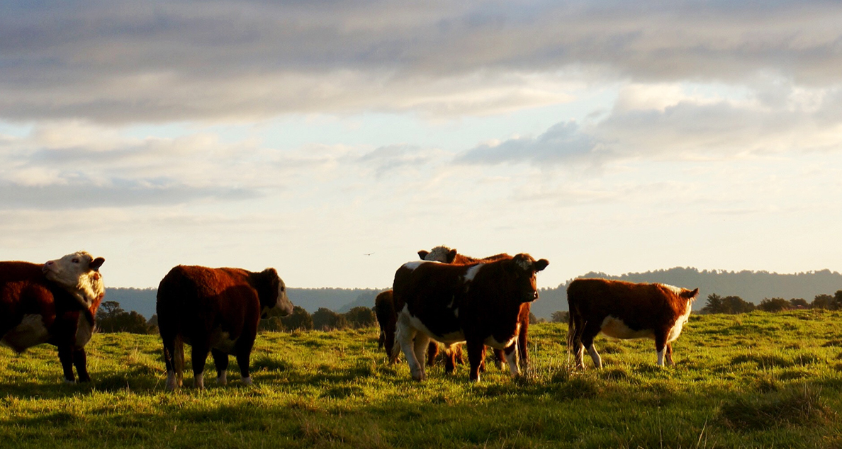 Ranchers and Ranching Development
