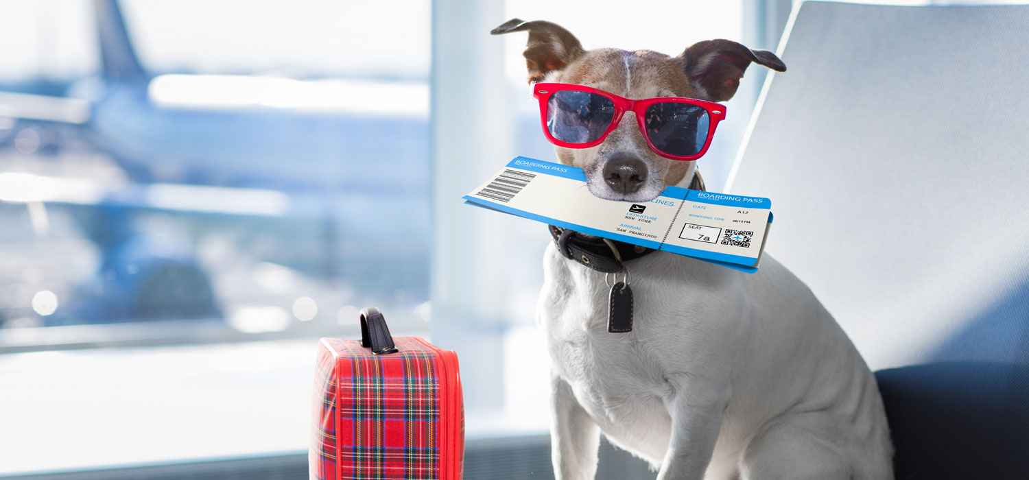 small dog with sunglasses holding airplane ticket