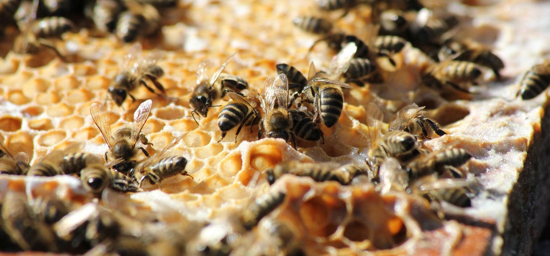 bees swarming around honeycomb