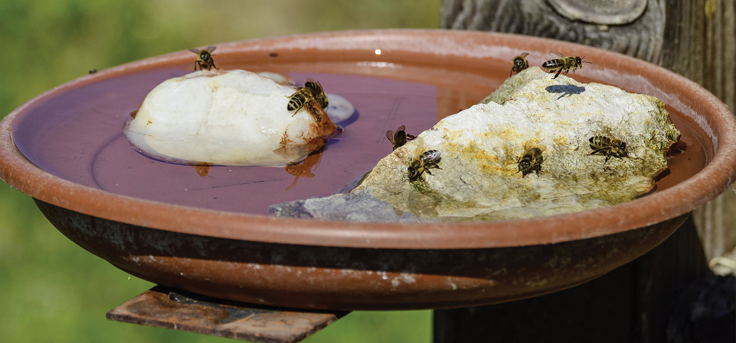 bees drinking water on plate