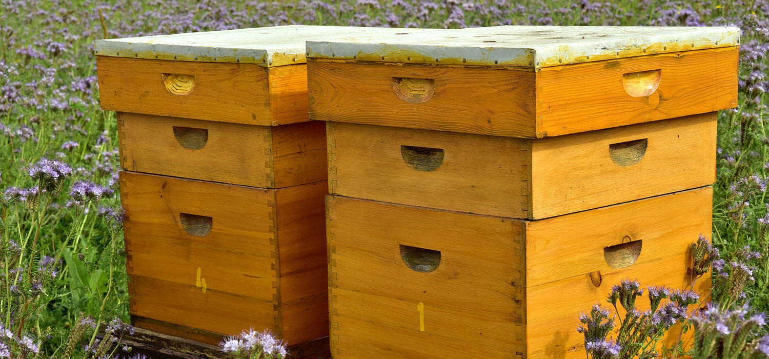 bee hotel boxes