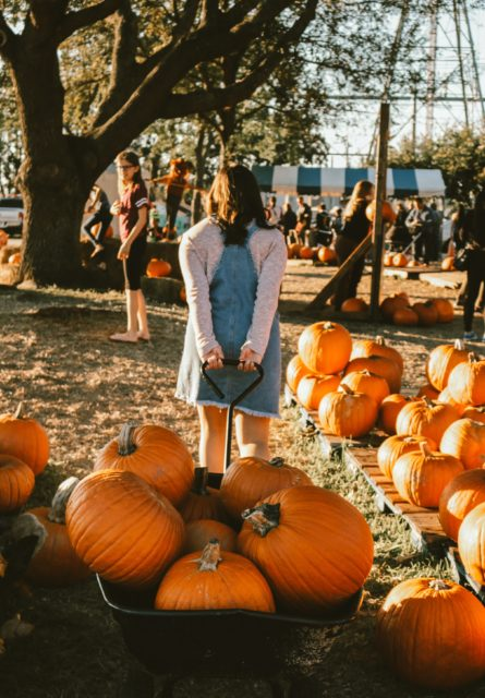 Child pulling wagon full of pumpkins