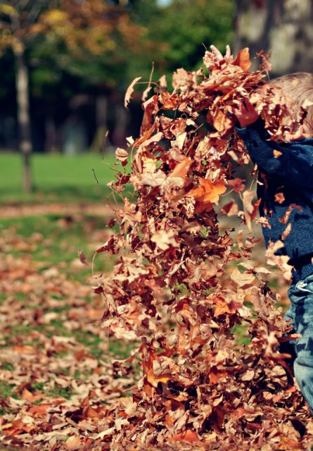 kid with handful of fallen leaves