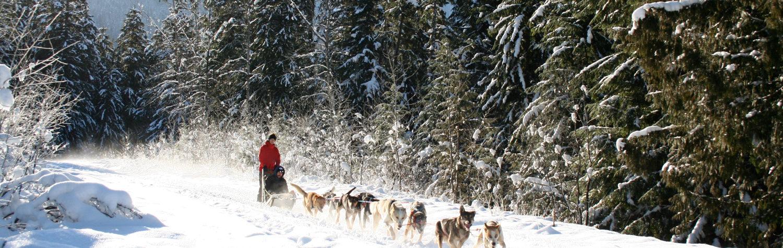 Revelstoke Dogsledding