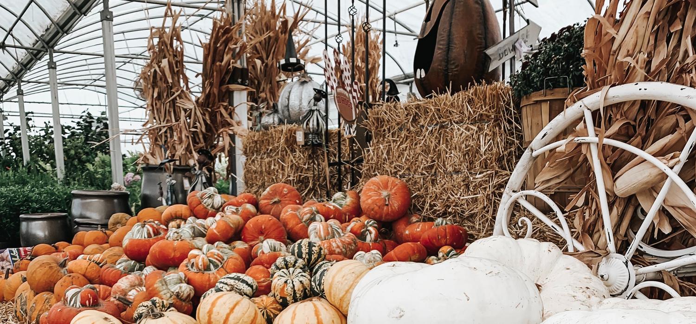 Indoor pumpkin patch