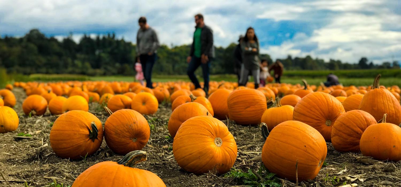 family walking through pumpkin patch
