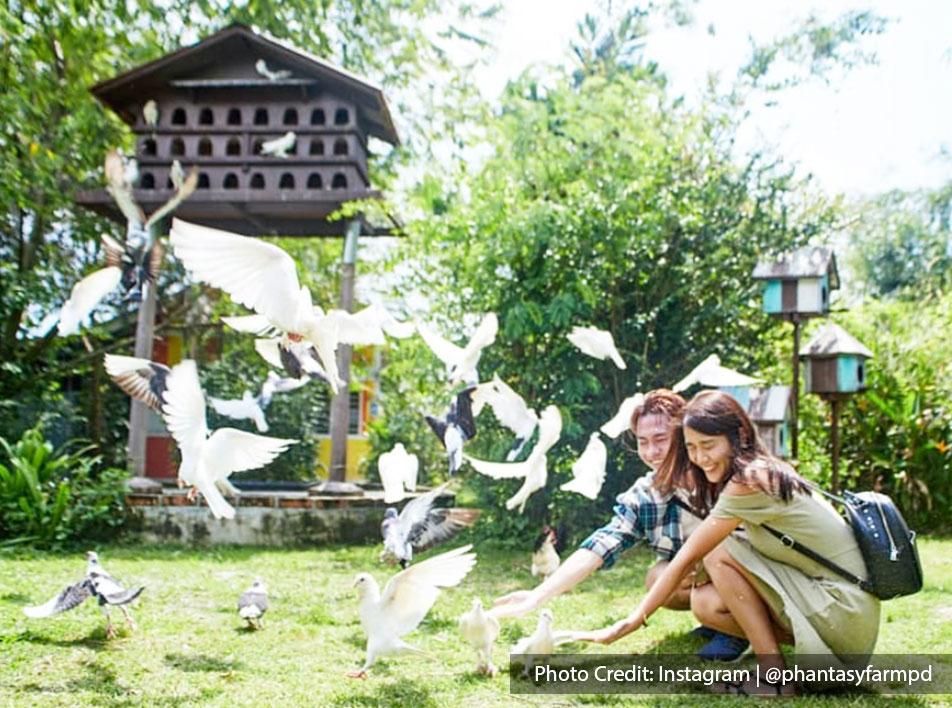 visitors in phantasy farm with birds