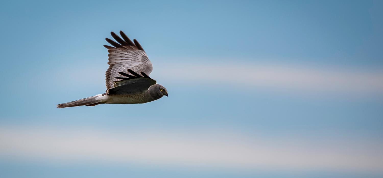 bird flying at Boundary Bay