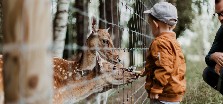 kid feeding deer at petting zoo