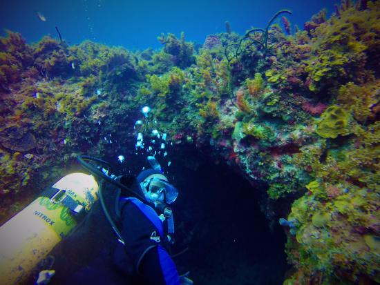 Throne Room Diving Spot In Negril Jamaica