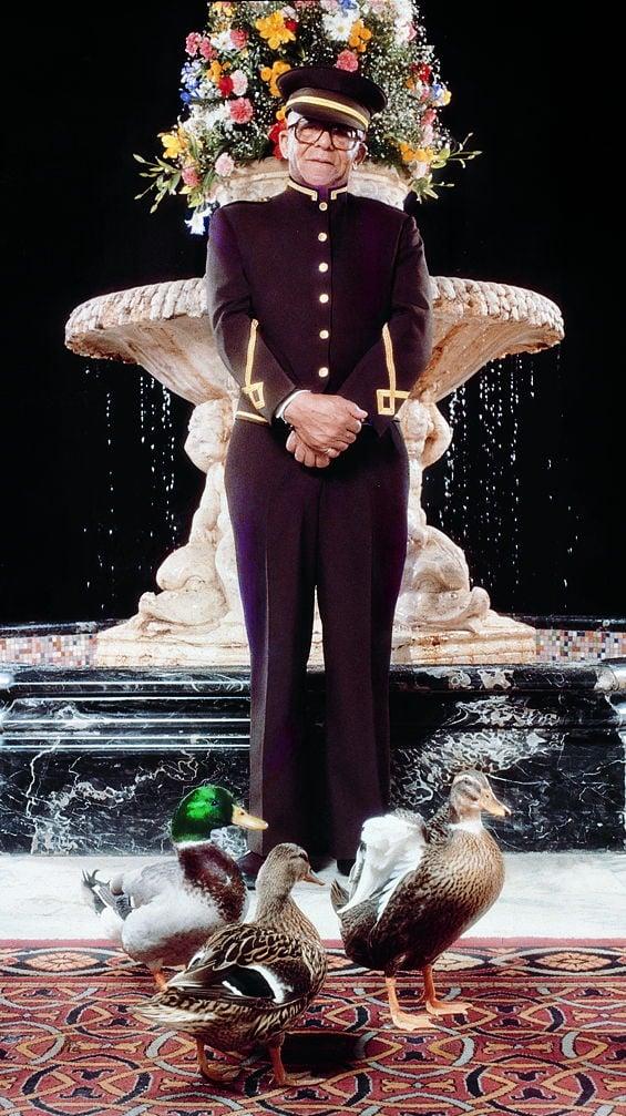 Mr. Pembroke and ducks