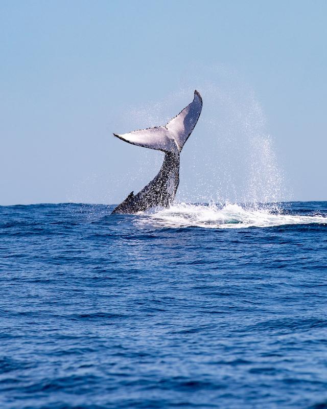 Rottnest Express Whale Watching Adventure Tour