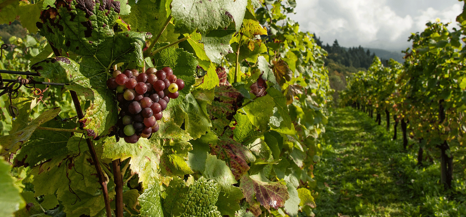 Oliver is a friendly town that is known as the Wine Capital of Canada